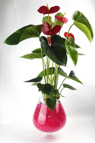 Billes hydrogel rose et anthurium